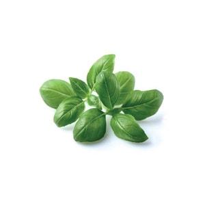 Click & Grow Basil Plant Pods