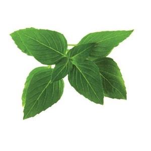 Click & Grow 3 Pack Thai Basil Plant Pods