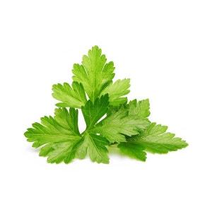Click & Grow Cilantro/Coriander Plant Pods